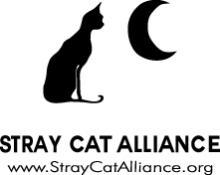 SCA logo w name ADI
